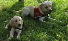 Hero Dogs Dolley and Radar