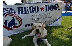 Hero Dogs Scotty