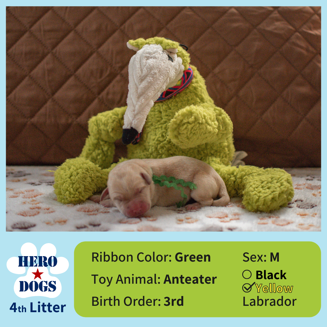 Green puppy 1 day old 4th litter 4-20-21 graphic