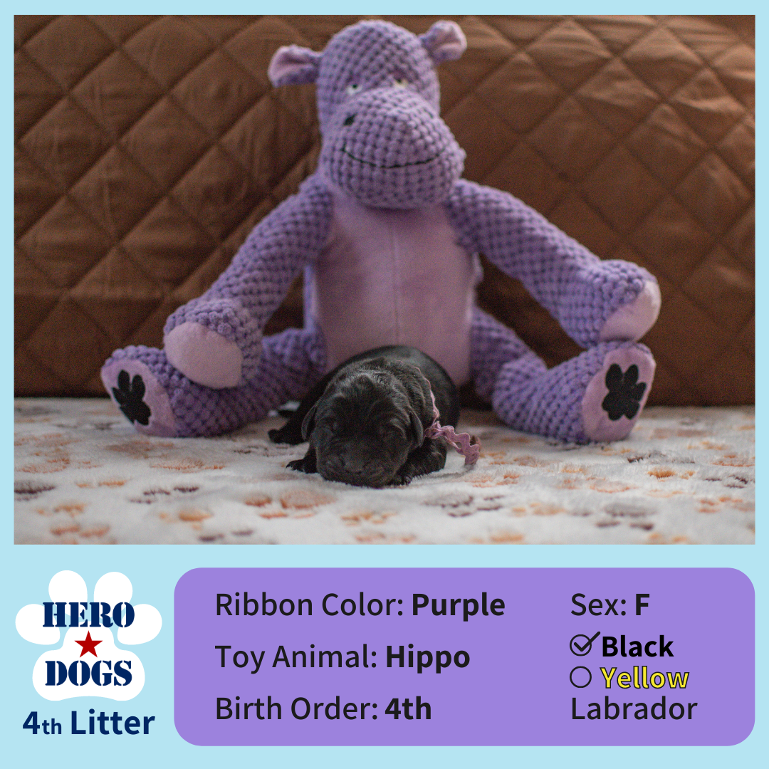 Purple puppy 1 day old 4th litter 4-20-21 graphic