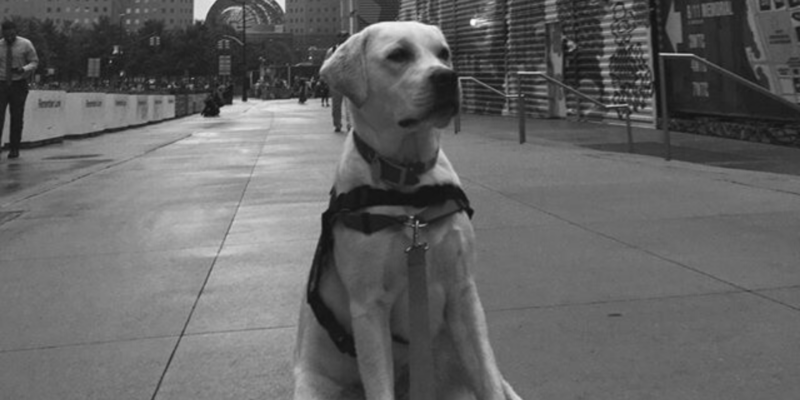 Hero Dogs Ducky sit at site of 9/11 World Trade Center attacks