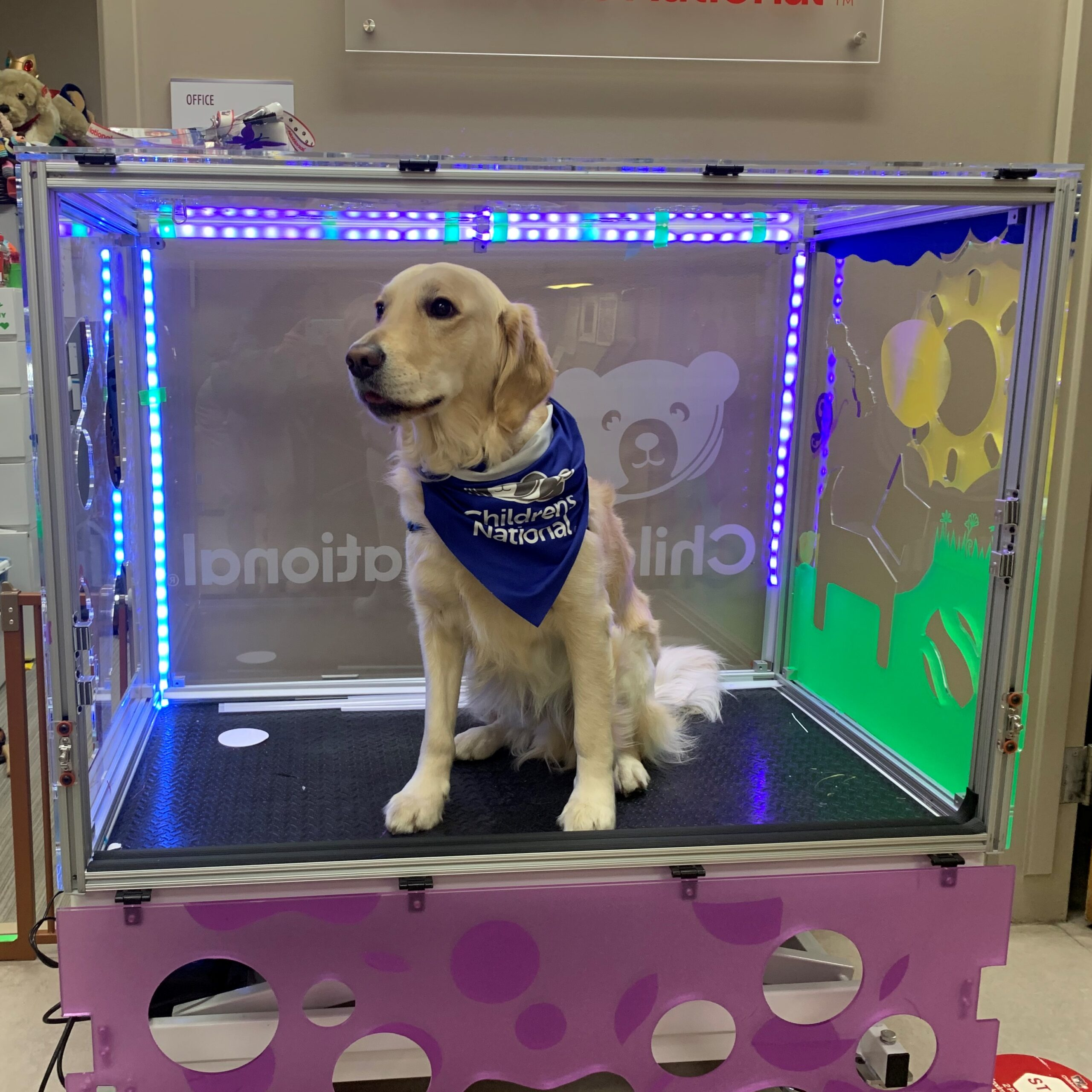 Hero Dogs Barney
