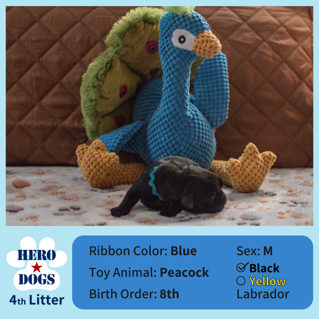Blue puppy 1 day old 4th litter 4-20-21 graphic