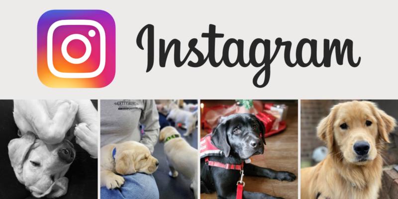 Follow Hero Dogs on Instagram
