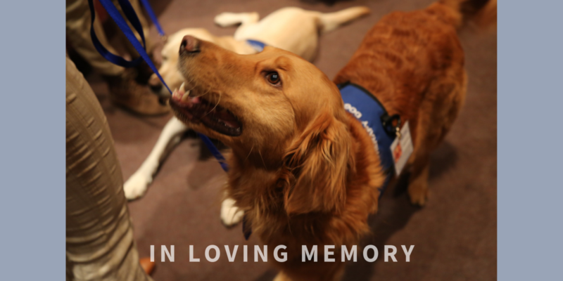 """Hero Dogs Teddy with text """"In Loving Memory"""""""