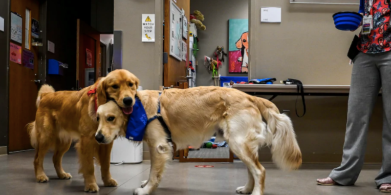 Hero Dogs Barney and his coworker Company at Children's National Hospital