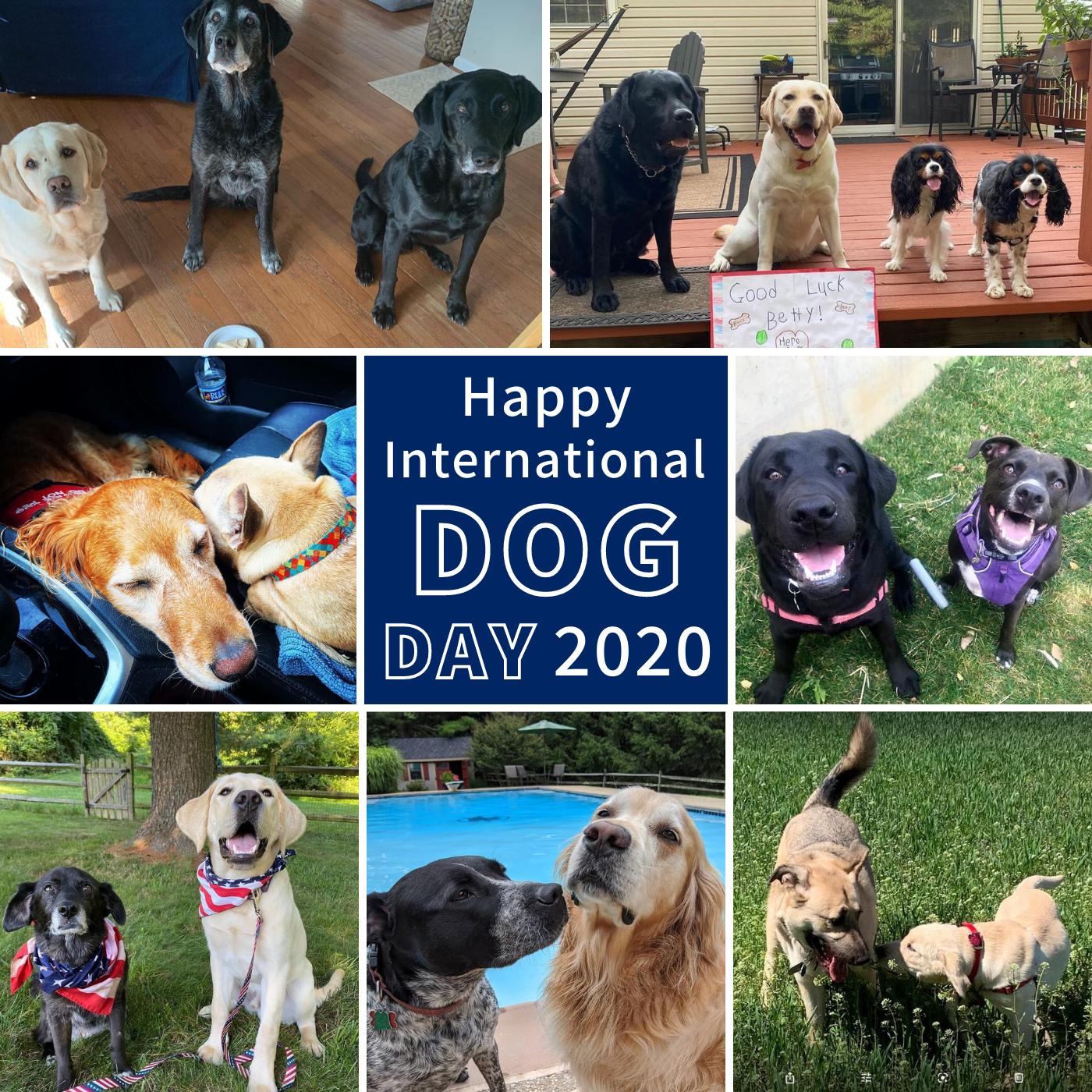 International Dog Day 2020 collage 1