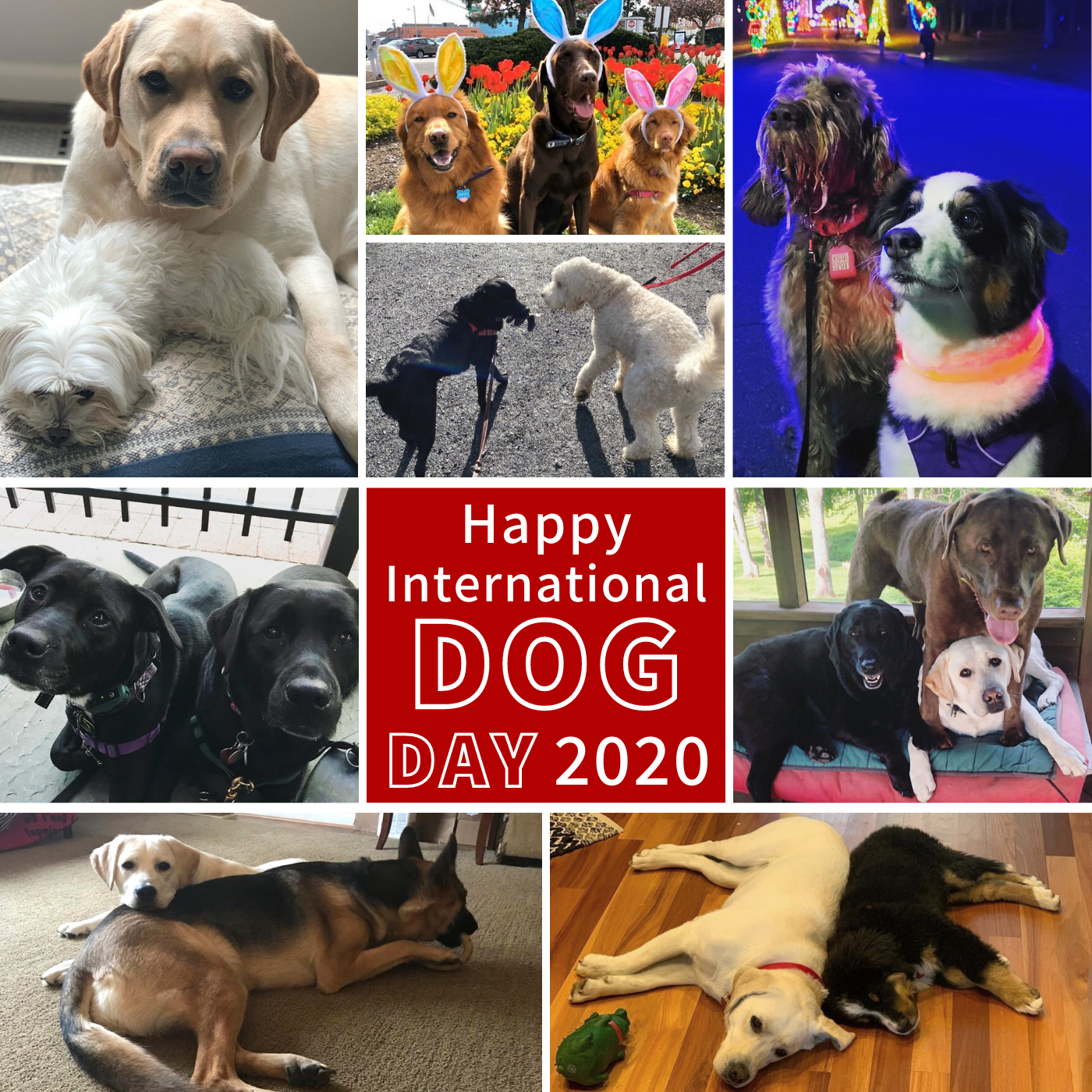 International Dog Day 2020 collage 2