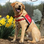 Hero Dogs ChesterFacility Dog