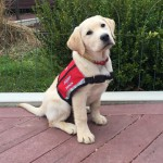 Hero Dogs ClaraPuppy ProgramClick to Donate