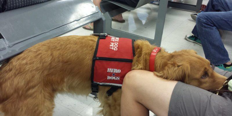 Hero Dogs Frankie lap