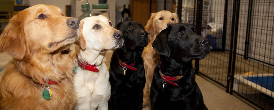 Hero Dogs Kennel Orientation – Sun, May 19