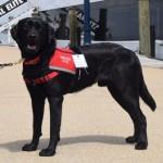 Hero Dogs LouiePuppy ProgramClick to Donate