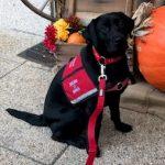 Follow Hero Dogs Maddie on Instagram