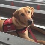 Hero Dogs MunroAdvanced TrainingClick to Donate