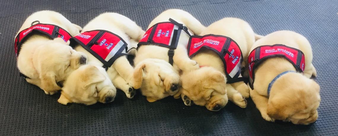 Puppies for Hero Dogs Clara Barton