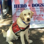 Hero Dogs RobbieAdvanced TrainingClick to Donate