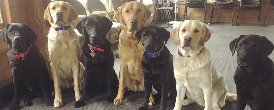 Intro to Hero Dogs